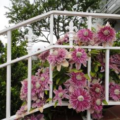 garden-2010-spring-033_34627239713_o