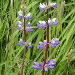 garden-2010-spring-132_34627232593_o