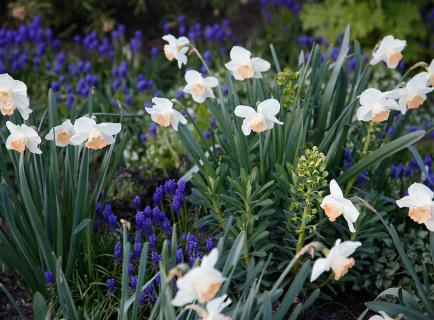 alpaca-farm-and-gardens-spring-gallery-image-09