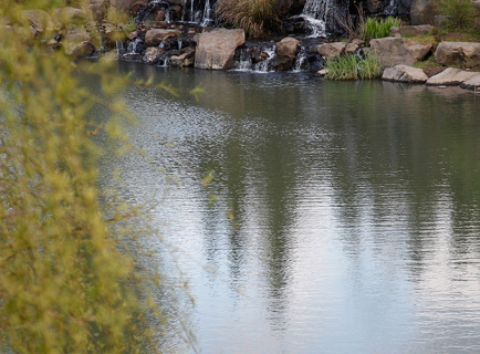 alpaca-farm-and-gardens-spring-gallery-image-10